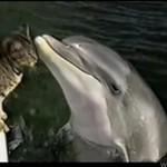 Delfin głaszcze kotka!