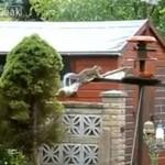 Wiewiórka i jej karuzela