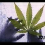 Marihuana była w Polsce.. legalna!