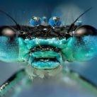 Prosto w oczy - owady
