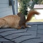 Kot bawi się z wiewiórką - SŁODZIAKI!