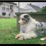 Pies nałogowiec