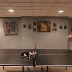Ninja kot gra w ping ponga