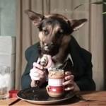 Pies spożywa kolację