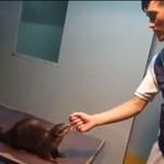 Japończyk ZABIŁ wydrę jednym uderzeniem!