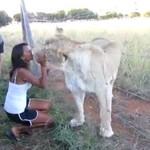 Te lwy kochają się przytulać!