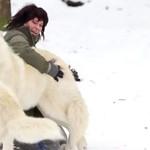 Wilki polarne bawią się w śniegu