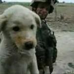 Żołnierz nakarmił umierającego psa CHILI!