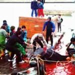 Doroczna MASAKRA delfinów w Japonii - SZOKUJĄCE!