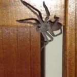 Jak prawdziwi mężczyźni radzą sobie z masywnymi pająkami?