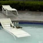 Kaczuszki w basenie