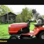 BDF - Bardzo Dziwne Filmiki