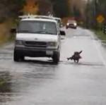 Pies złowił rybę... Na ulicy!