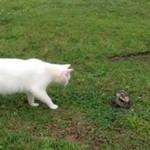 Kot unika ataku węża!