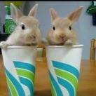 Kolekcjoner SŁODKOŚCI - 2 króliczki