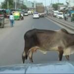 Tak jeździ się w Indiach!