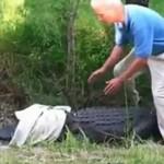 Aligatorkontra człowiek