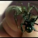 Przez 2 minuty trzymał na dłoni najbardziej jadowite pająki świata