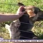 Wyrzucili psa z autostrady - BESTIALSTWO!