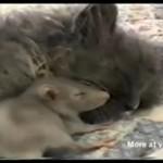 Kot i szczur - najlepsi przyjaciele!