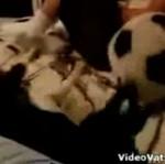 Pies, który gra w piłkę