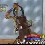 Bójka gigantycznego żuka ze skorpionem!