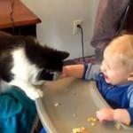 Głodne zwierzęta - uwaga, niebezpieczne!