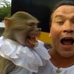 Małpa przedrzeźnia właściciela!