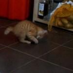 ZIEMNIAK - nowy przyjaciel kota