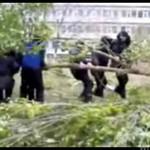 Ruski policjant kontra drzewo - OSTATNIE STARCIE!