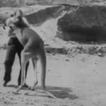 Kangur-kickboxer