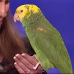 Ta papuga ma ogromny talent!