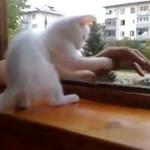 Kotek RATUJE rękę!