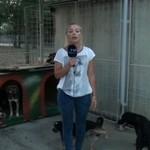 Pies oznaczył reporterkę - WPADKA!