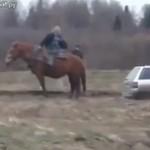 Koń wyciąga auto z błota