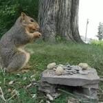 Wiewiórka, nagrana GoPro