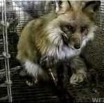 OKRUTNE traktowanie zwierząt - naprawdę na to zasłużyły?