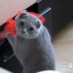 Kot, przyłapanyna gorącym uczynku