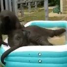 Kolekcjoner SŁODKOŚCI - kąpiel słoników