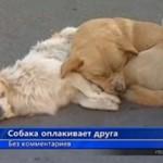 Pies OPŁAKUJE swojego przyjaciela!