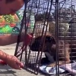 Ludzie MASOWO porzucają psy!