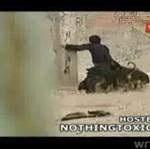 Grupa psów zaatakowała mężczyznę