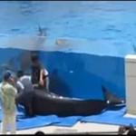 Delfin WYPADŁ z akwenu!