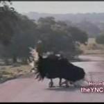 Zwierzęta też potrafią tańczyć