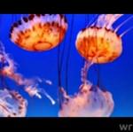 PIĘKNE morskie stworzenia - kompilacja