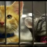 Koty proszą o adopcję - ŚWIETNE!