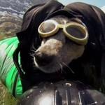 Pies podbija przestworza - w wingsuicie!