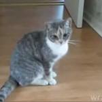 Kot pod wpływem marihuany