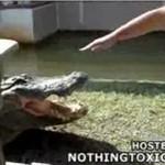 KrokodylODGRYZŁ mu palce!