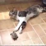 Żółw wkurza kota